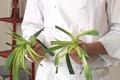 Préparer des poireaux
