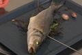 Contrôler la cuisson d'un poisson