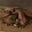 Canard confit aux échalotes et à l'ail