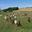 Chèvrerie de la Vallée des Dorins