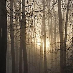 la forêt de Perseigne