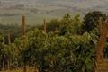 le vignoble de Madiran vers Diusse