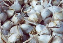 Galinail ou cuisses de poule farcies sauce à l'ail