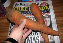 carotte de Tilques