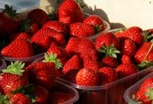 fraises du Nord-Pas-de-Calais