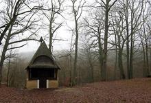 forêt de Vibraye