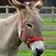 un âne... à défaut de photo de beignet pet d'âne