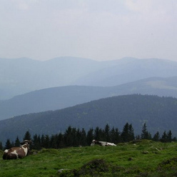 Les Hautes Vosges alsaciennes