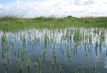 Association des ramasseurs de Salicornes de la Baie de Somme