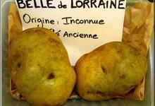 une variété ancienne de pomme de terre lorraine