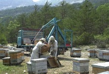 François Bertin apiculteur