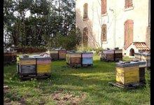 Ferme apicole de l'Esterel