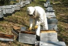 Richard Martoia, les ruchers de Provence