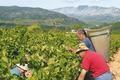 Les Vignerons des Côtes d'Agly