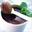 Mousse au chocolat à la menthe