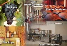 Vignobles Boissonneau