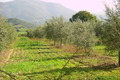 Miellerie du Nebbiu, huile Morati
