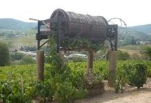 Deschamps Philippe, viticulteur