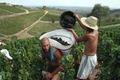 Eric et Pauline Morin, viticulteurs
