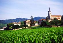 Michel Laplace, viticulteur