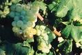 Les Vignerons du Baou