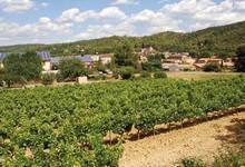 Les vignerons de Correns