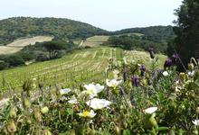 Domaine la Tourraque, GAEC Brun Craveris
