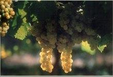Vignobles Fontan