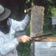 La miellerie, Jacques Caron apiculteur