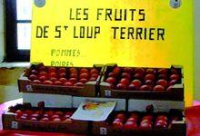 Les fruits de Saint Loup terrier