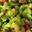 Mousseline de Rhubarbe