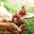 Françoise Laveau, poulets BIO, BIO EDEN