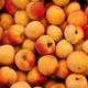 Tajine d'Agneau aux Abricots