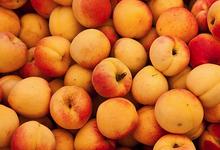 Abricots à la Cannelle