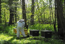 apiculture foret sologne