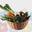 Ecocinelle, livraison de paniers de fruits et légumes régionaux