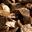 huitres du Bélon