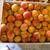 abricot rouge du Roussillon