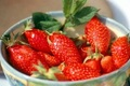 fraise de Nîmes