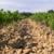 Syndicat des vignerons de Signargues