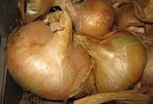 oignon de Citou