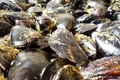 moules de Bouzigues
