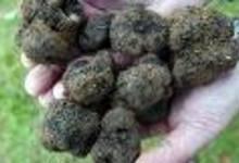 Produits du terroir : Truffes