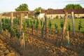 Vignoble Loubery Chateau Haut Mayne
