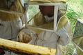 api'ânes, rucher des 4 reines