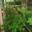 les jardins de malbos