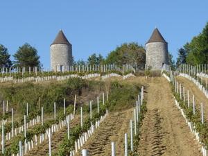 Le Domaine - Vignoble des moulins de Boisse
