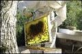 Dubant François, apiculteur