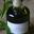 Liqueur Verveine des Marmottes