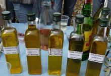 L'olivier de Vincent
